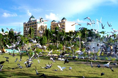 Birds in People's Park: Photo taken by Edgar Arro
