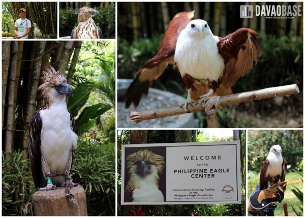 The majestic birds at Philippine Eagle Center